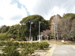 相楽神社(兎上神社) 社叢