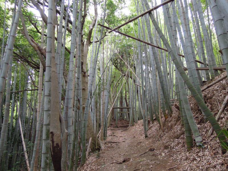 星神社(大生城)参道