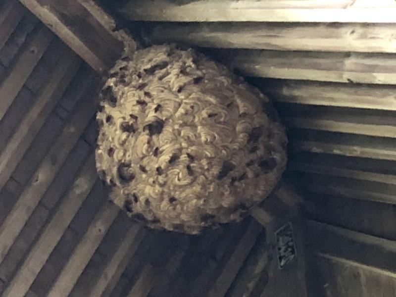兎谷 金山彦神社 ハチ