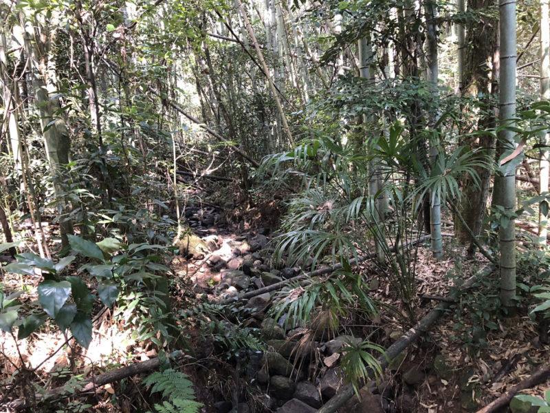 熊本 兎谷 上流